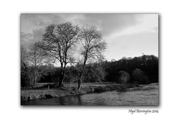 The Trees by the river bank 1