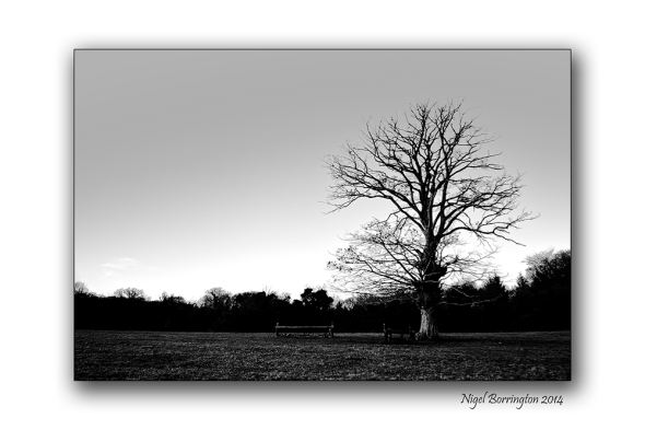 The Trees by the river bank 3