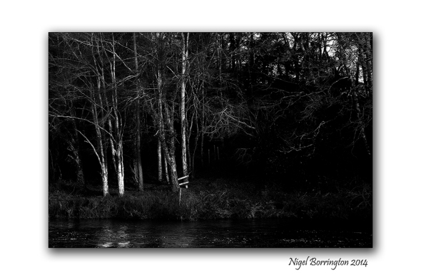 The Trees by the river bank 4