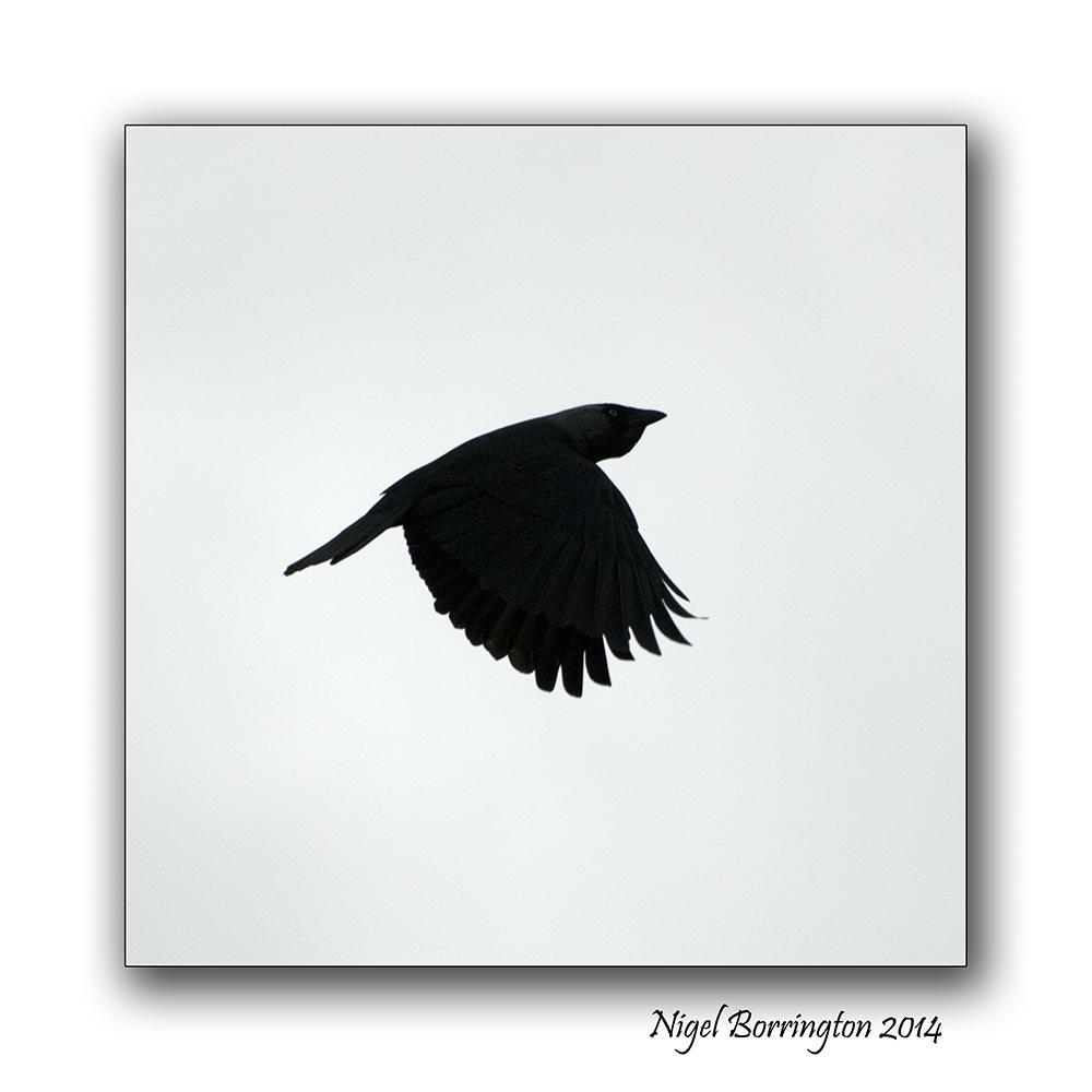 Birds Flight 2