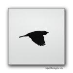 Birds Flight 3