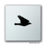 Birds Flight 4