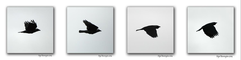 Birds Flight 6