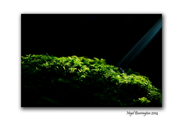Finding the light 02