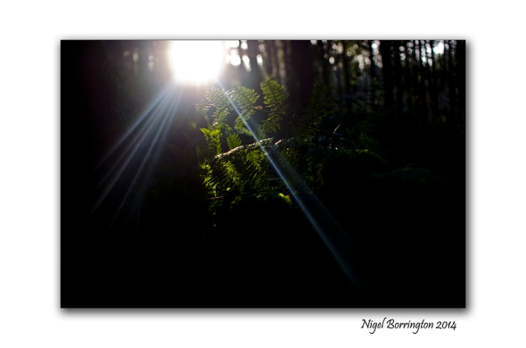 Finding the light 03