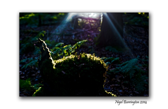 Finding the light 05