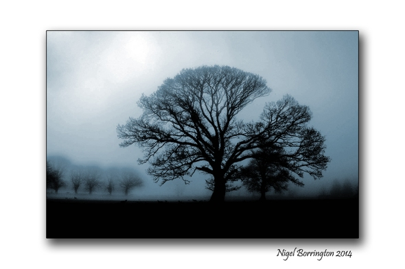 Novembers song  Irish Landscape Photography : Nigel Borrington