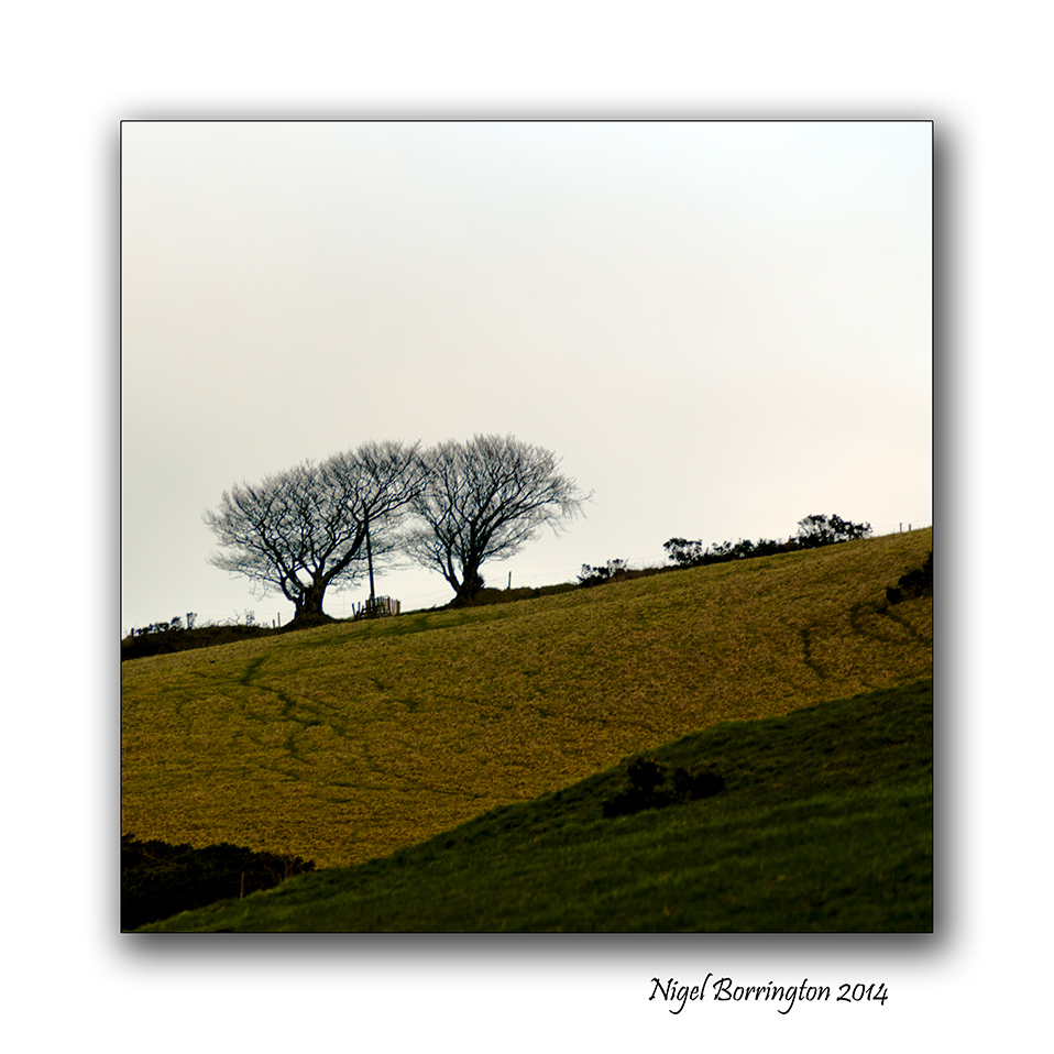 Square format in the landscape 3