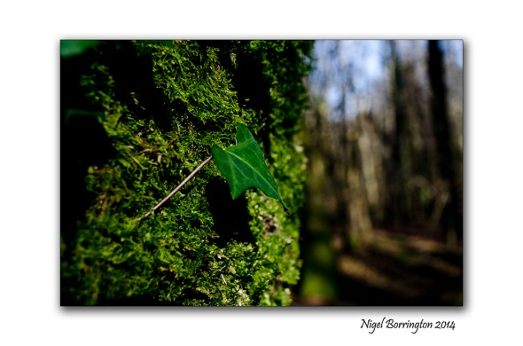 In woodland places 3