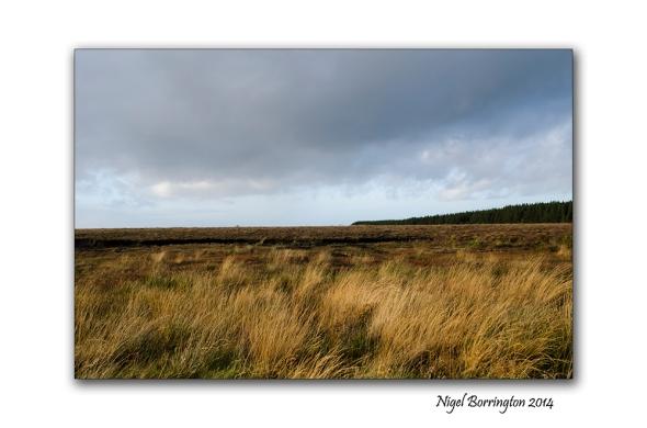 Irish bogs 3