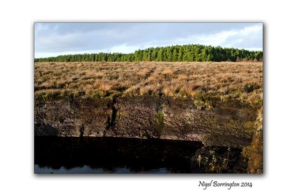 Irish bogs 4
