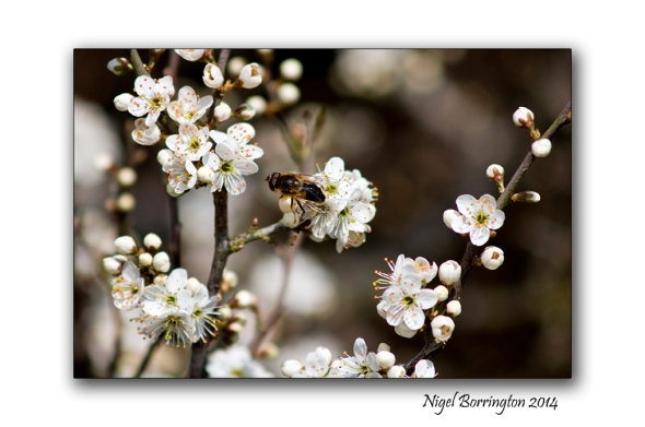 Spring equinox 3