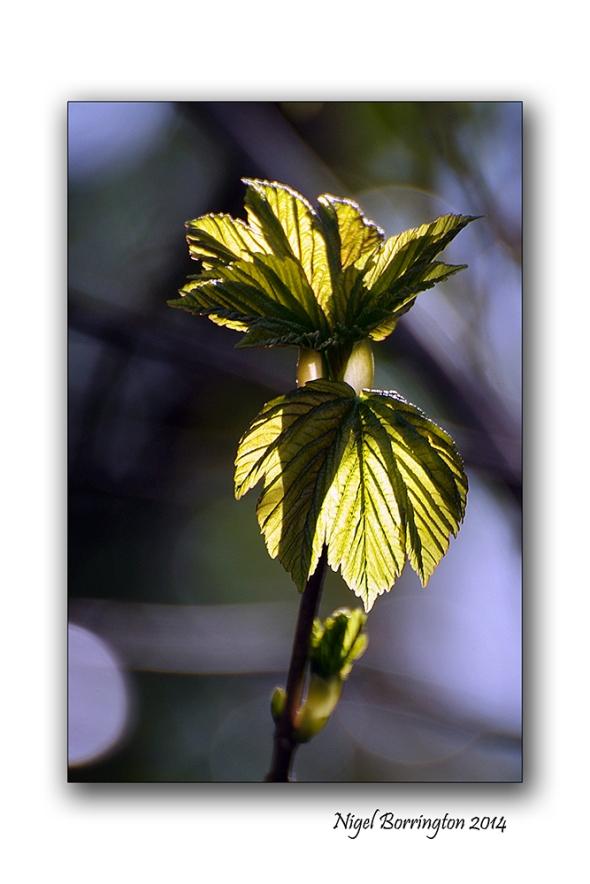 Spring equinox 6
