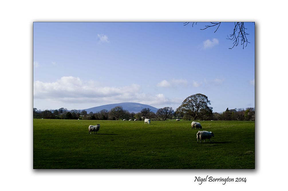 Easter in the Landscape 5