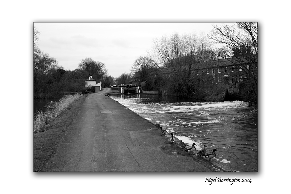 Grand union Canal harefield 06