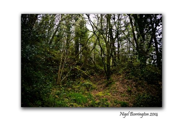 Woodland Sorrel 07