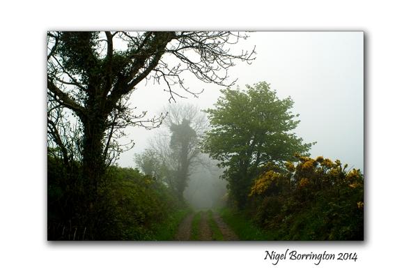 A Misty Day 2