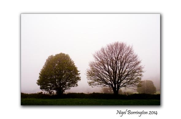 A Misty Day 4