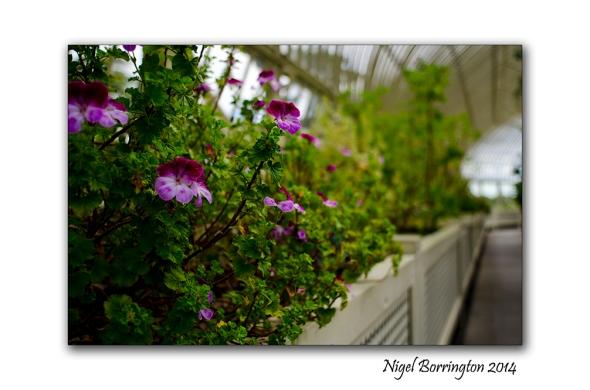 Dublin National Botanic Gardens 3