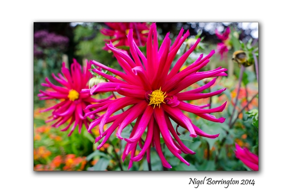 Dublin National Botanic Gardens 5