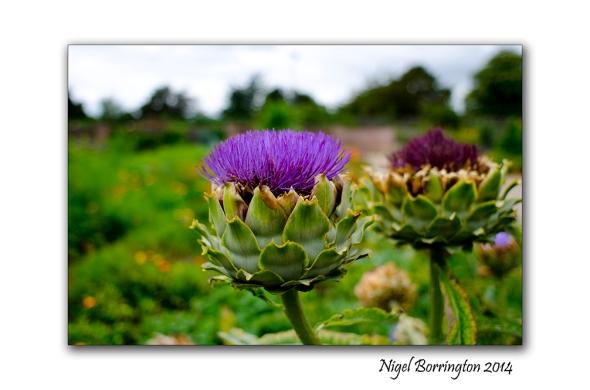 Dublin National Botanic Gardens 7