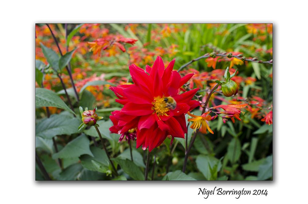Dublin National Botanic Gardens 8