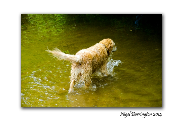 Molly swimming 5