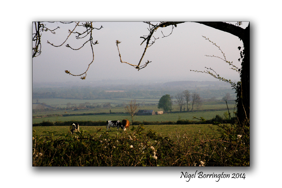 Saturday morning on coolagh hill 3