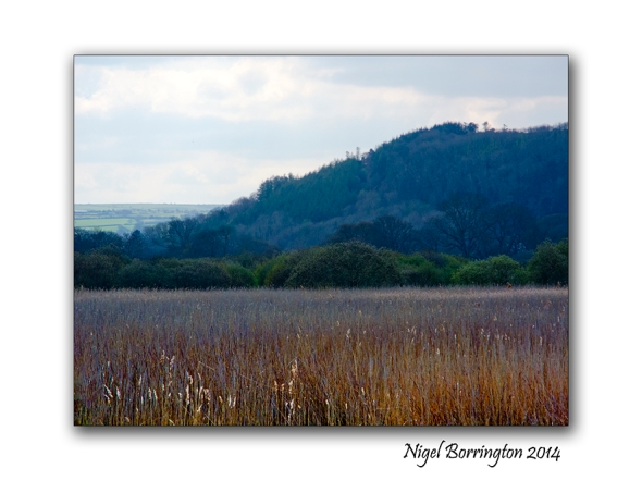 Teifi Marshes Wildlife reserve 4