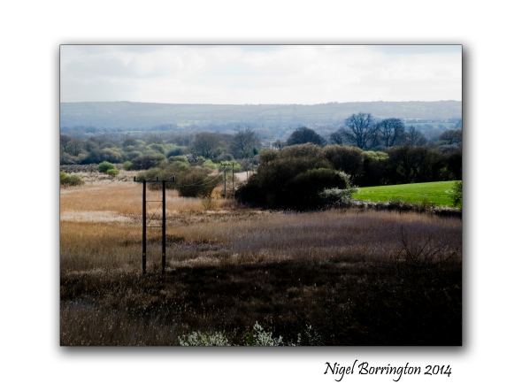 Teifi Marshes Wildlife reserve 6