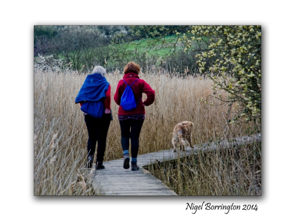 Teifi Marshes Wildlife reserve 8