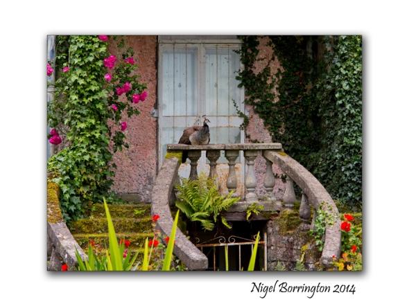 Altamont Gardens 8