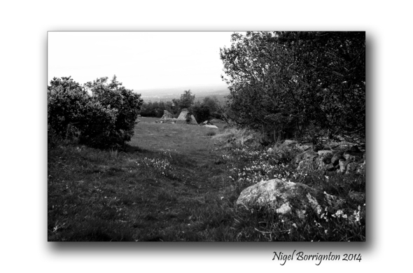 Black and white landscape 4