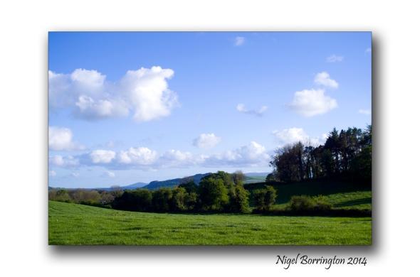 Green landscape 6