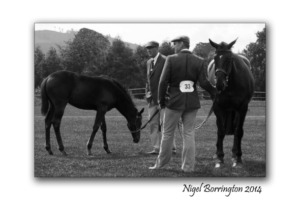 Number 33 - Mother and foal competition, Iverk show, County Kilkenny. Photography : Nigel Borrington