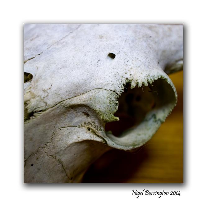 Sheeps Skull oil lamp still life 2