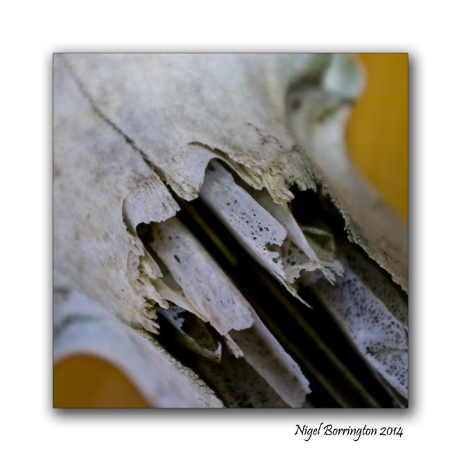 Sheeps Skull oil lamp still life 4