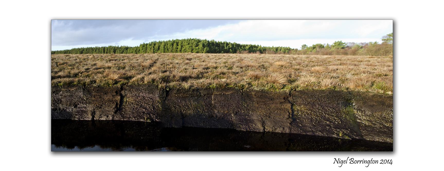 The bog of Allen 2