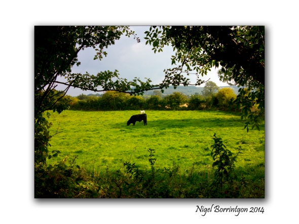 Barrackquarter county Kilkenny 5