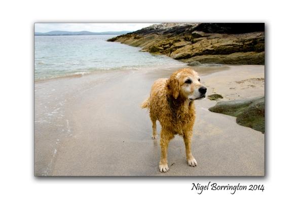 Coolieragh Glengarriff 8