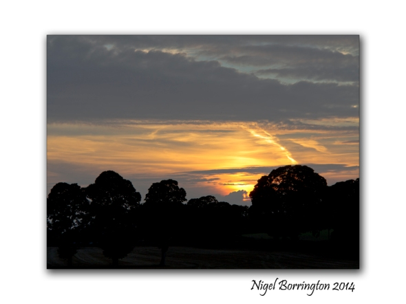 Golden Evening on the river Barrow kilkenny 5