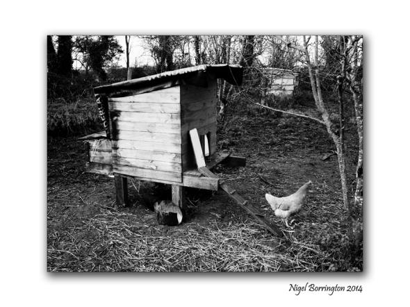 As winter falls upon the Farm. Photography : Nigel Borrington