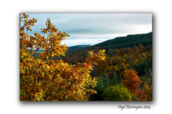 Autumn Landscape, County Kilkenny, Landscape Photography : Nigel Borrington