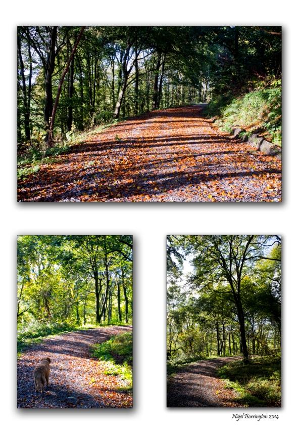 Jenkinstown , Forest Park, County Kilkenny. Landscape Photography : Nigel Borrington
