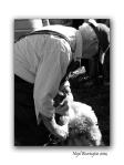 Sheep Shearers 3