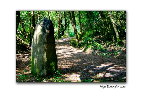 Standing stone at Glengarriff Nature Reserve. Landscape Photography : Nigel Borrington