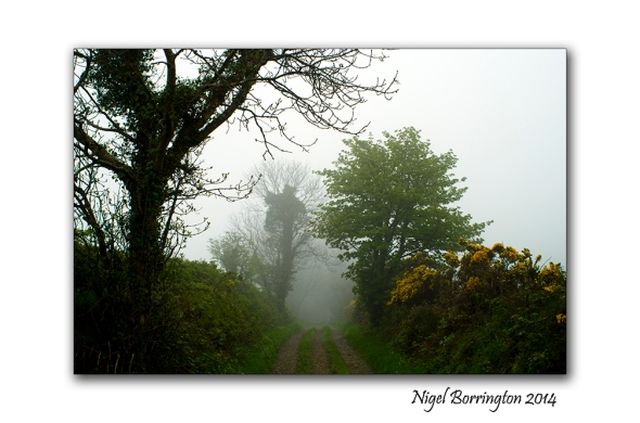 Misty Morning on the lane. Kilkenny Landscape Photography : Nigel Borrington
