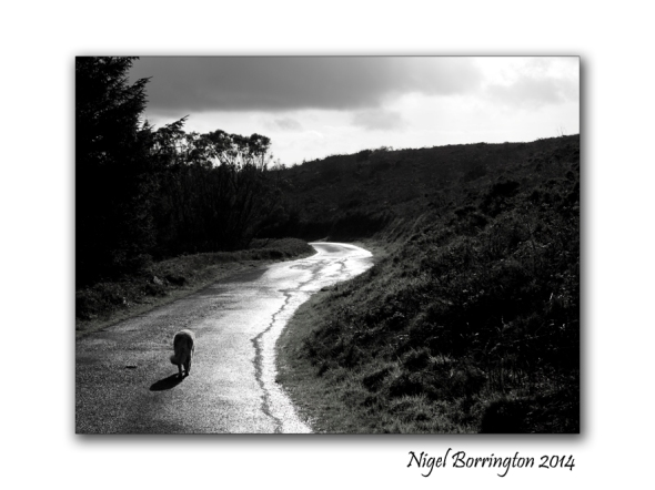 The old Country lane Irish Landscape photography : Nigel Borrington