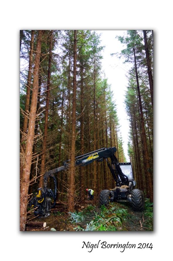 Irish forester work 3