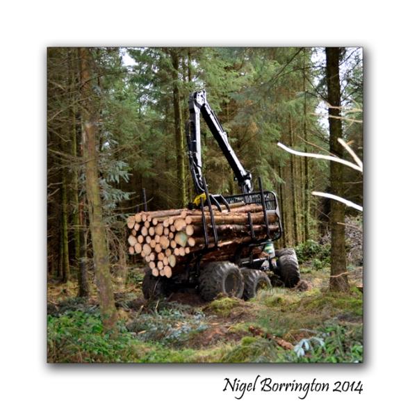 Irish forester work 4